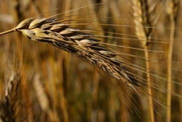Ukrayna'nın tahıl üretiminde 25 yılın rekoru kırıldı, 66 milyon ton