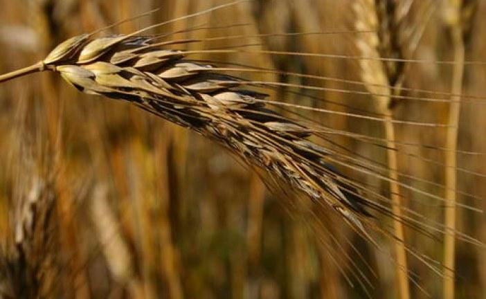 Sektörün içinden; Tarımda üretim maliyetleri artıyor