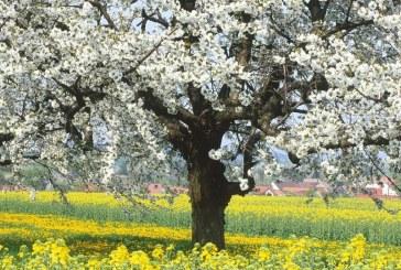 Ukrayna'ya bahar bu sene erken geliyor, Mart ayı sıcak geçecek