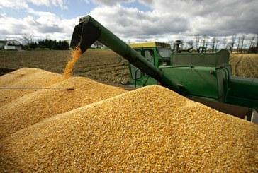 """Tarım Birliği Başkanı, """"üretim yeterli mısır ihracatına sınırlama getirmeyin"""""""