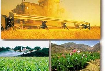 Ukrayna'nın tarım ürünleri en fazla Çin'e gidiyor
