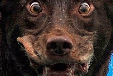 43 kişiyi ısıran köpek Poltava'da korku saldı