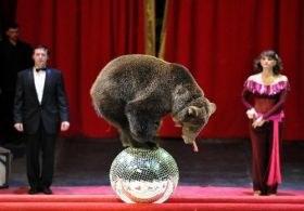 Ukrayna'dan gelen sirk hayvanları gümrükten geçemedi