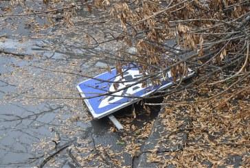 Üzerine ağaç dalı düştü, 90 bin UAH tazminat kazandı