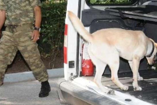 TSK'da suçlu kovalayan köpekleri Ukrayna eğitecek