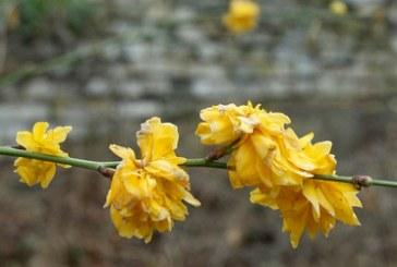 Kiev'de son 130 yılın sıcaklık rekoru kırıldı, ağaçlar çiçek açtı