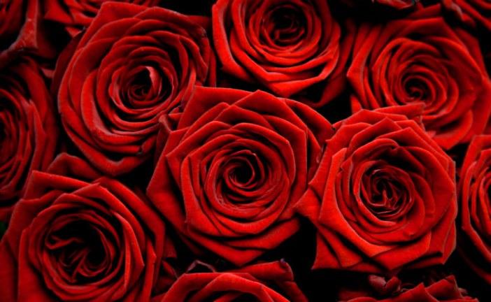14 Şubat'ta sevdiğinizi unutmayın, www.sendflower.com.ua