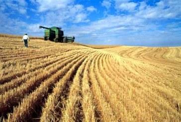 Ukrayna tarımında tehlike çanları; toprakların yüzde 20'si bu sezon ekilemeyebilir