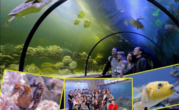 Çocuklarınızla eğlenceli bir hafta sonu; Oceanarium sizleri bekliyor (video)