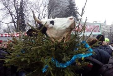 Ukraynalı çiftçilerden Parlamento önünde ürküten eylem