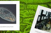 Bu etkinlik kaçmaz, 'mikroskop altında balık avı' başladı