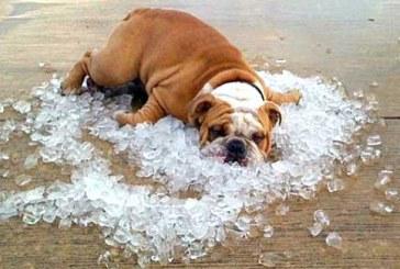 Meteoroloji uyardı, Temmuz ayında 41 derece sıcaklık bekleniyor