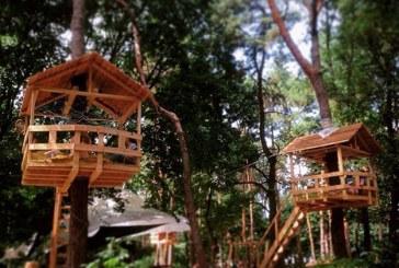 Kiev'deki Truhanov Adası'nda sıradışı bir mekan, ağaç kafe Skvoreçnik hafta sonu açılıyor