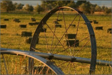 Parlamento yasağı uzattı, tarım arazileri bir sene daha satılamacayak