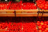 Ukrayna pazarında Türk domatesi bolluğu, 11 aylık ithalat 2015'i geride bıraktı