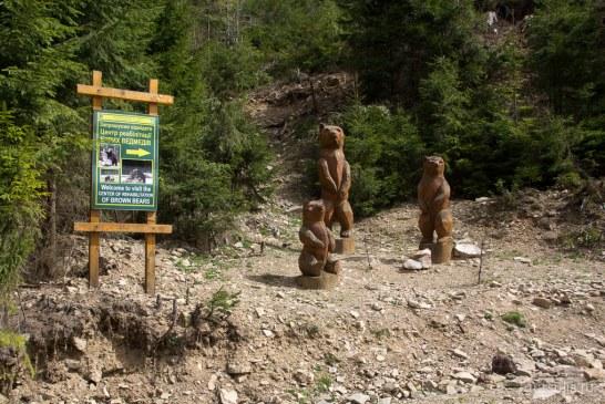 Burası Karpatlar, canlıya verilen değerin göstergesi ayı rehabilitasyon merkezi kapılarını ziyaretçilere açtı
