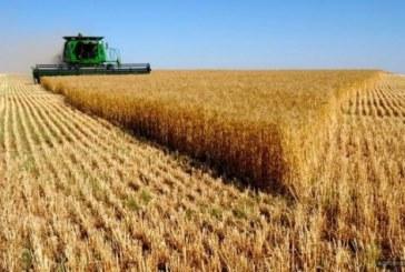 Sektörün içinden, Ukrayna'daki tarım arazilerinin özelleştirilmesi ve kiralamasında son durum