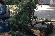 400 yıllık ağacın dalı kırıldı, Türk vatandaşı ağır yaralandı