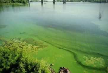Dnyeper nehrinin suyu yeşile döndü, uzmanlar uyardı 'yüzmeyin'