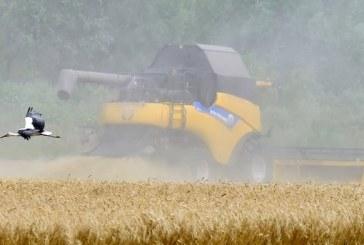 Ukrayna tarımında bereket yılı, tahıl üretimi 66 milyon tonu geçti