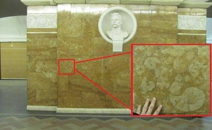 Foto hayat; Universitet Metrosu'nun milyon yıllık süsleri, Ammonitler