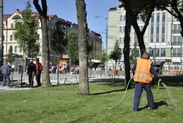 Podol'de örnek proje, büfeleri kaldıran belediye yerine ağaç dikti