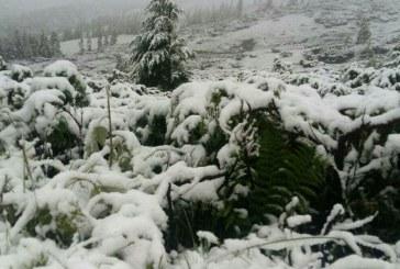 Mevsimler şaşırdı; Karpatlar'a kar yağdı