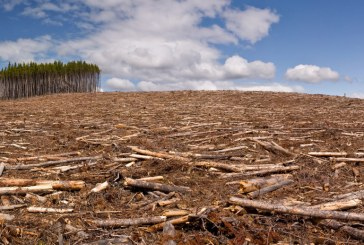 Ukrayna ormanlarını geri kazanmak için harekete geçti, altı ayda Odesa büyüklüğünde alana ağaç dikildi