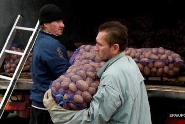 Ukrayna patatesi depolarda beklerken, ülkeye ithalat 700 kat arttı