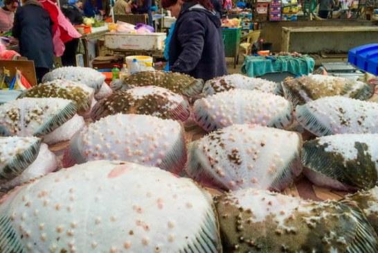 Sektörün içinden, Ukrayna'nın taze balık ihracatında Türkiye 2. ülke