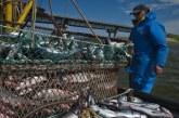 Ukrayna'nın su ürüleri ihracatında ilk beş ülke açıklandı, Türkiye 4. sırada