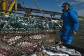 Ukrayna'nın su ürünleri ihracatında ilk beş ülke açıklandı, Türkiye 4. sırada