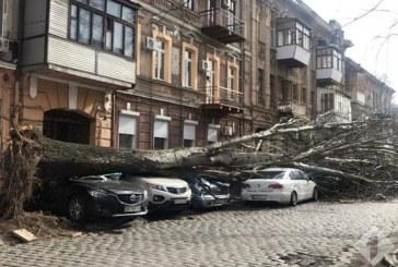 Odesa'da fırtına dehşeti, onlarca ağaç kökünden söküldü, bir kişi hayatını kaybetti (video)
