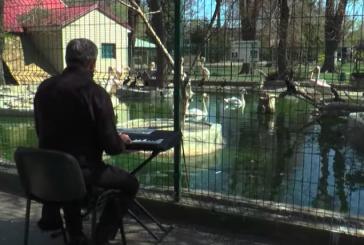 Hayvanat bahçesi müdüründen, hayvanlara konser (video)